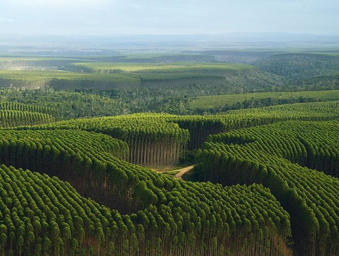 Floresta no Rio Grande do Sul