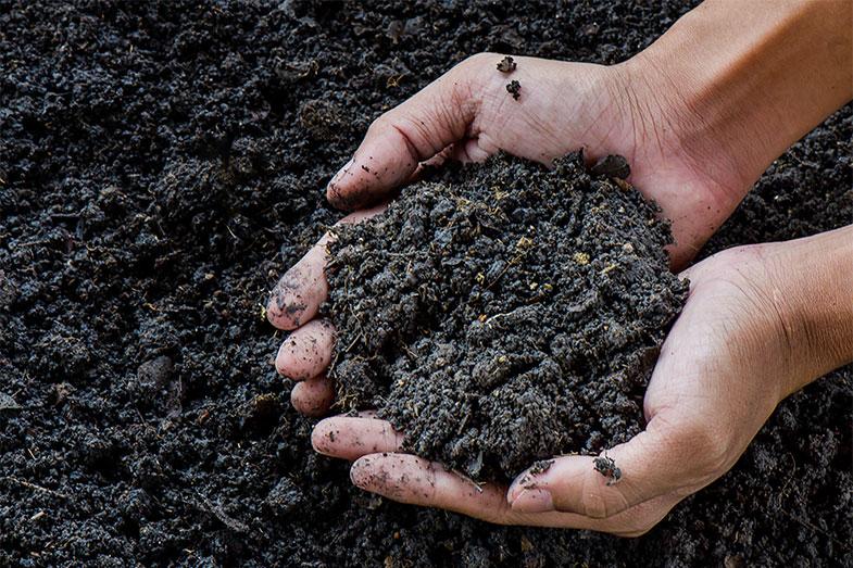 Compostagem humana pode ser a solução para problemas ambientais - Pensamento Verde
