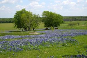 Texas0009