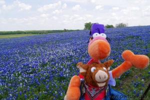 Texas0016