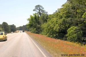 Texas0774