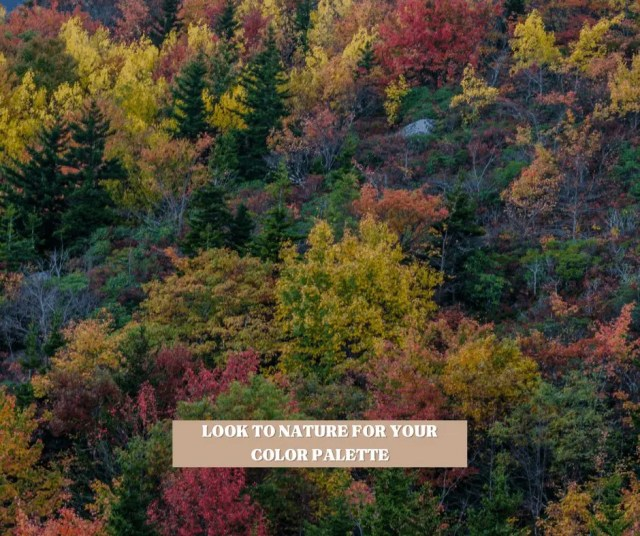 Look to nature for your cottagecore color palette
