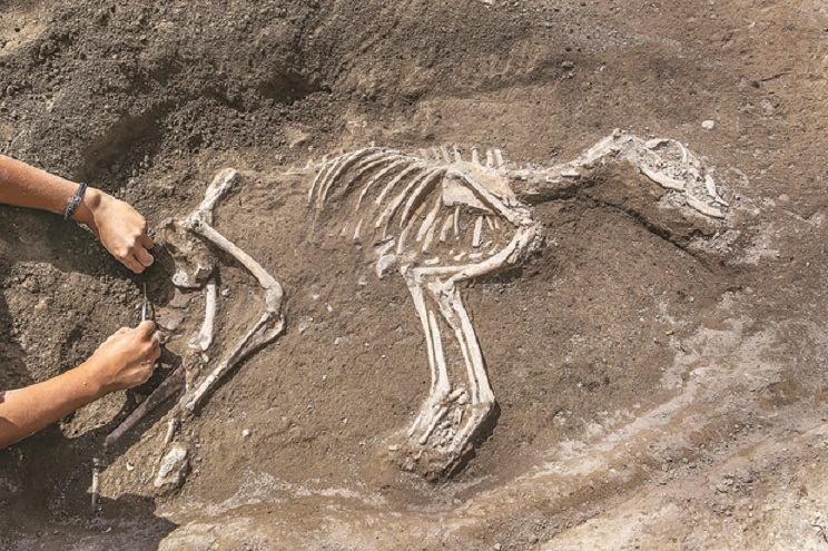 3000 year old dog skeleotn found in Van