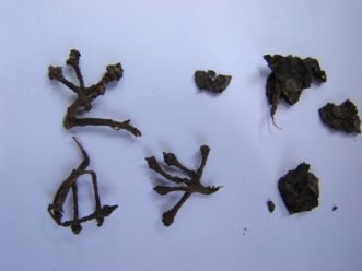 Grape stems and seeds. A range of 6,100-year-old desiccated grape stems and dried, pressed grapes was found on and around the wine press in the Armenian cave. The chemical studies were led by UCLA scientists and supported by the National Geographic Society, which also funded the archaeological work.