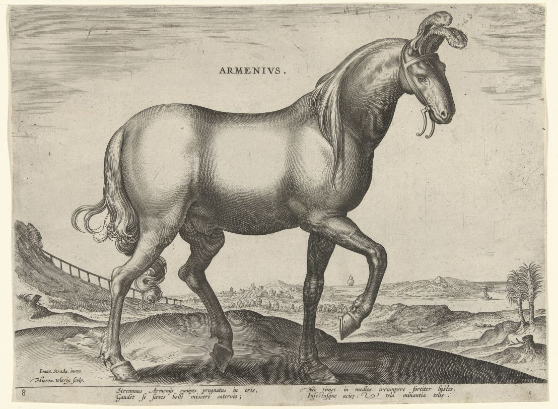 Horse from Armenia (Armenius), Hieronymus Wierix, after Jan van der Straet, c. 1583 - c. 1587