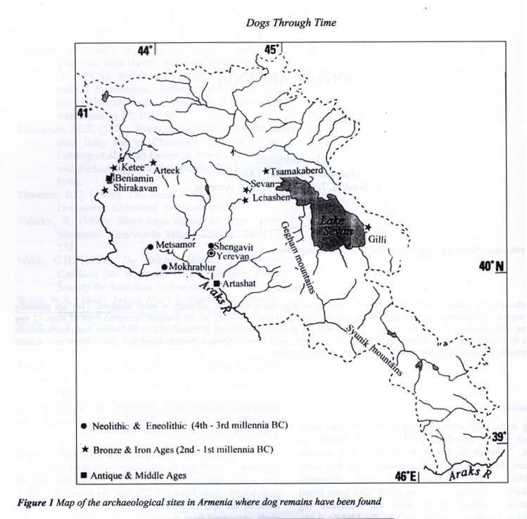 Map of the archaeological sites in Armenia where dog remains have been found. (source: Dogs Through Time: An Archaeological Perspective, Oxford : Archaeopress, 2000.)