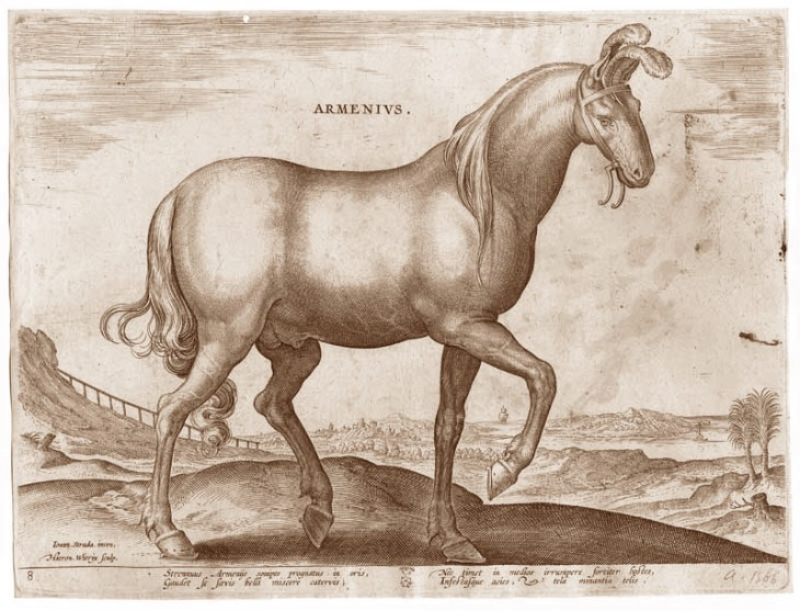 Armenius, Antique engraving of a prancing Armenian Horse by Joannes Stradanus 16th century engraving from one of the greatest illustrated horse books of all time.