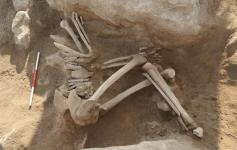 Bone remains from a bronze age archaeological site in Metsamor, Armenia