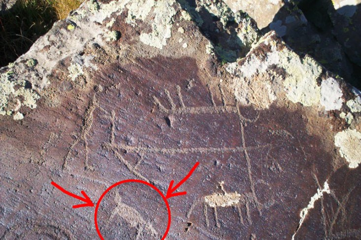 Shepherd dog alongside cattle plowing the earth depicted on 7000 year old petroglyphs found in Armenian mountains.