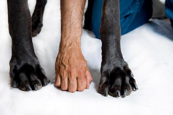 В США умерла самая большая собака в мире