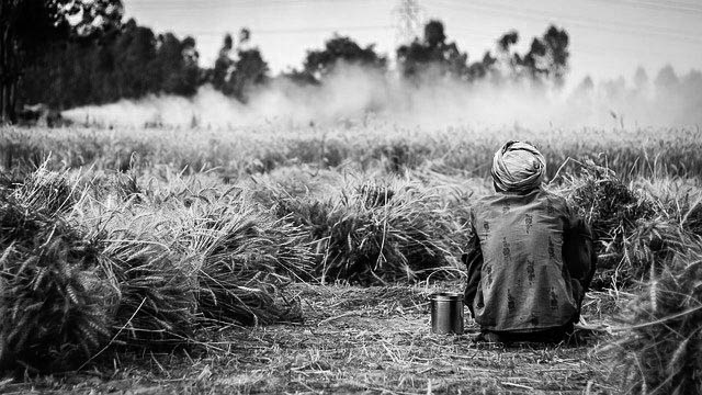 Farmers' suffering due to lockdown intensify in UP due to lack of wheat MSP