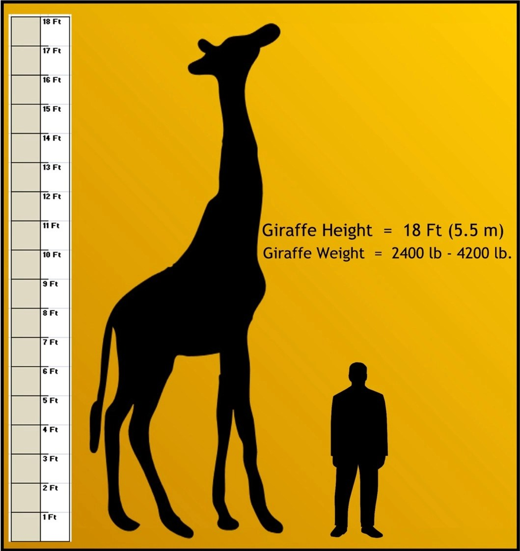 Peoria Zoo Weights And Measurements