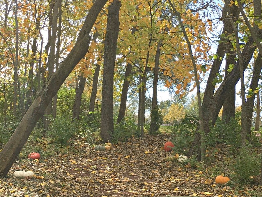 fall in love with Fall in Iowa-walk-peppermillbnb