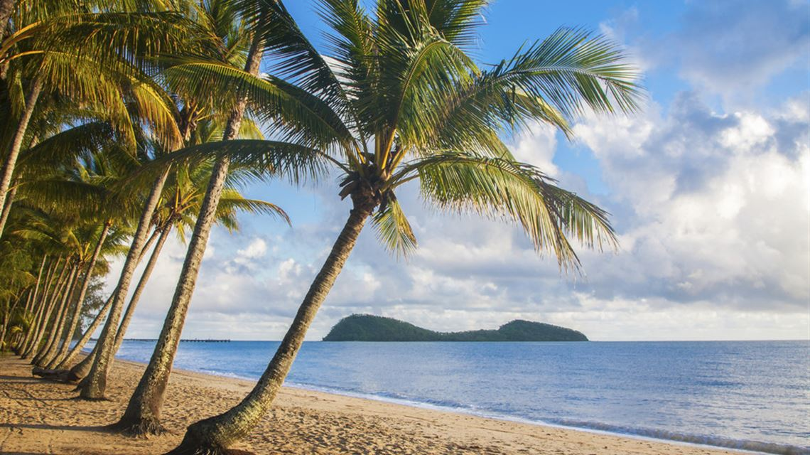 Image result for palm cove