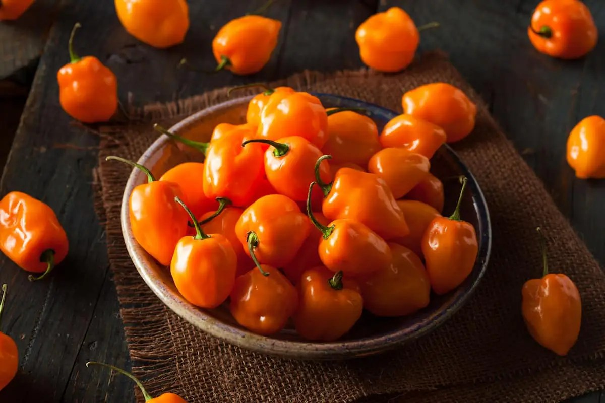 cooking with habanero peppers