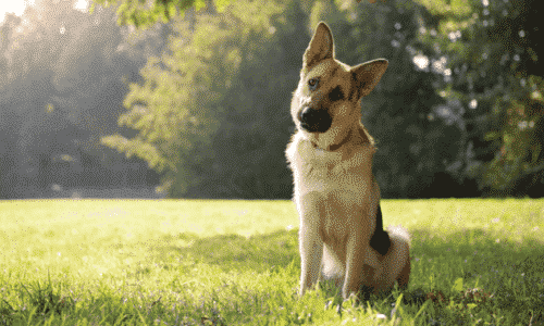 Hund Peranimal