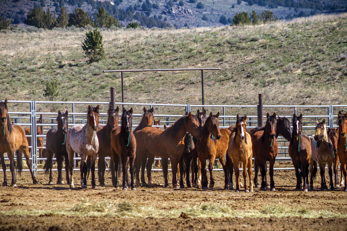 A Wild Idea to Solve the Wild Horse Problem