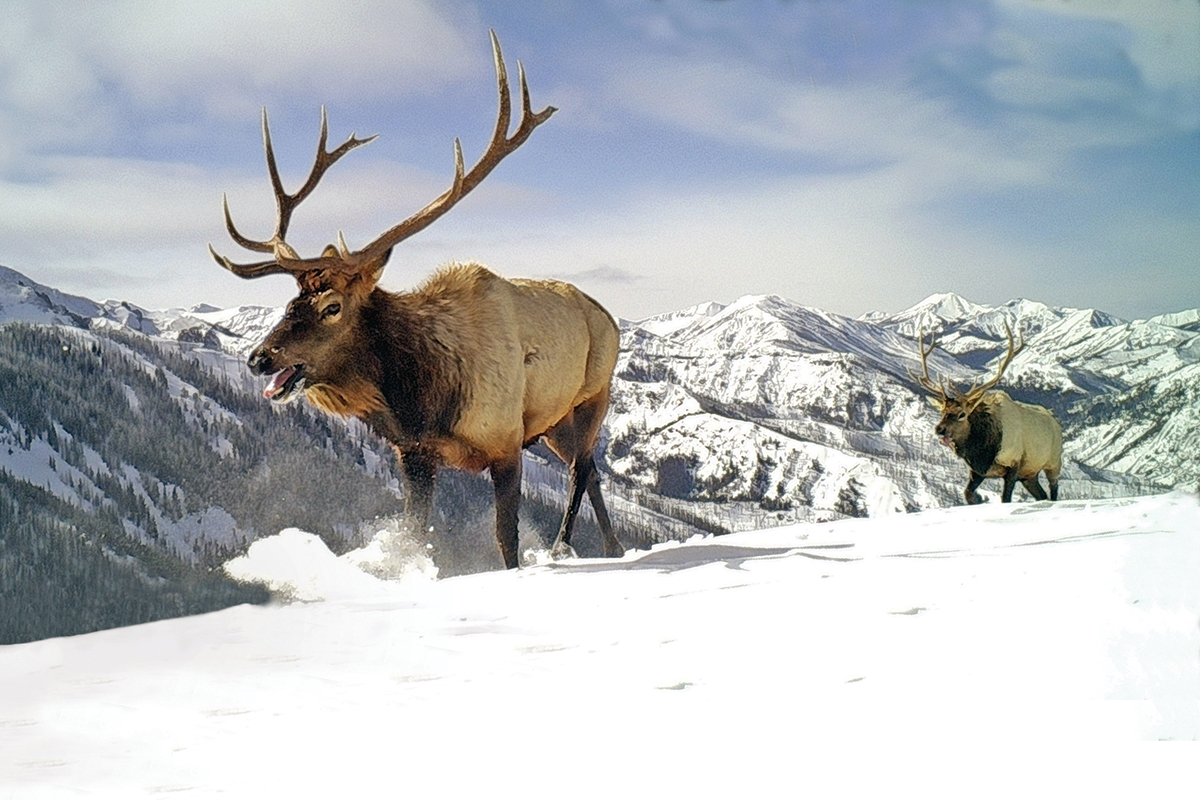 The Marvelous Migrations of Greater Yellowstone