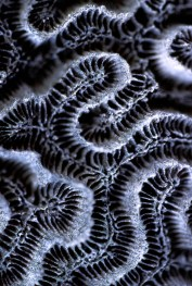 DryCoral