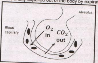 bioogy notes 4