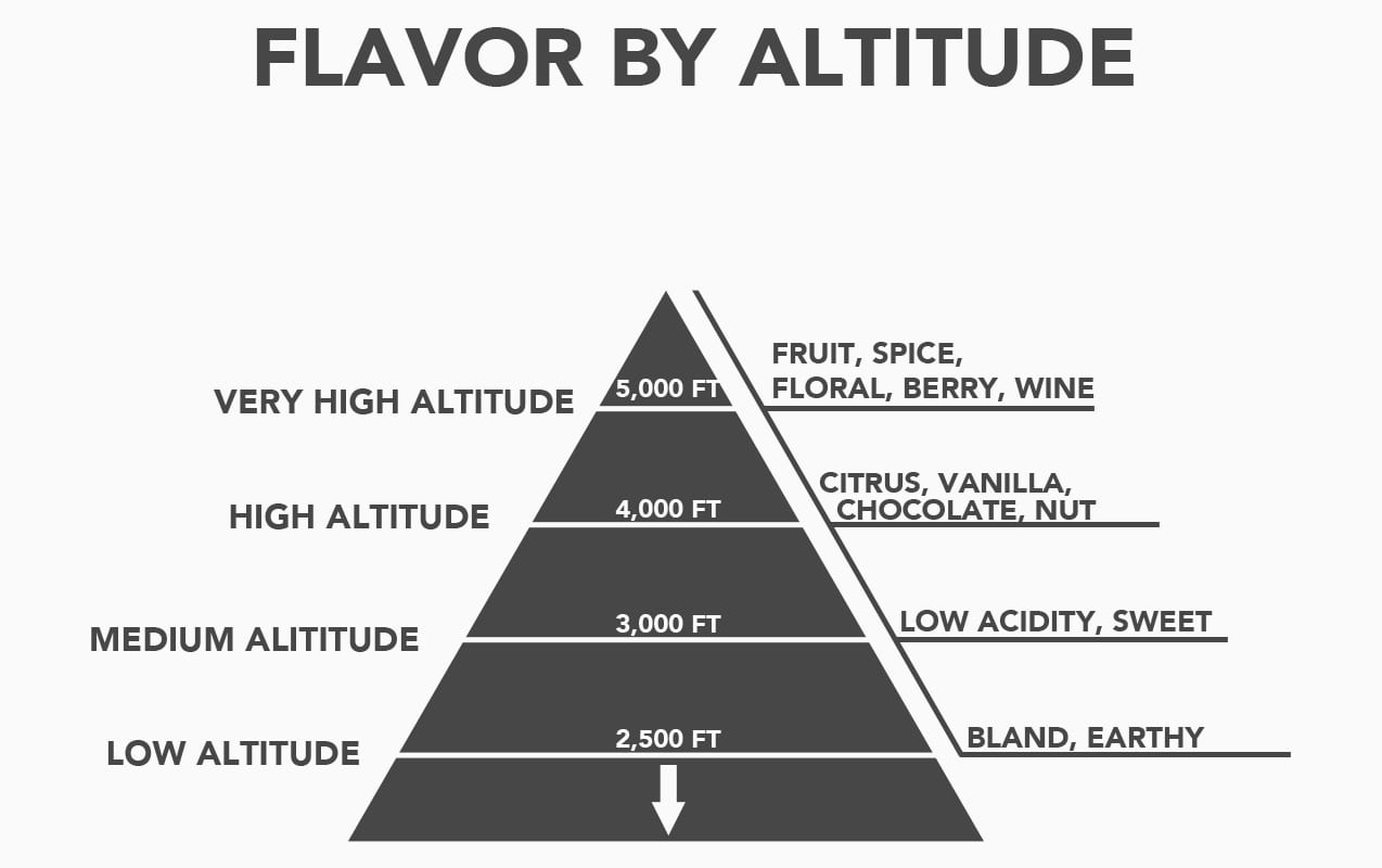 How Does Altitude Affect Coffee And Its Taste In The Cup