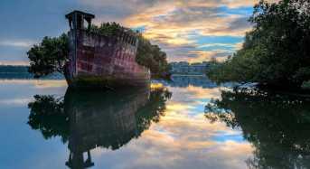 Το εγκαταλειμμένο πλοίο που έγινε πλωτό δάσος!
