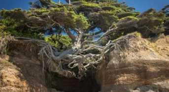 Μοναδικά Δέντρα που αρνήθηκαν να πεθάνουν!