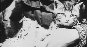 Το Άρρωστο Γατάκι του 1901 Ένα από τα πρώτα – πολύ σύντομα- φιλμ όπου εμφανίζεται ένα κατοικίδιο γατάκι