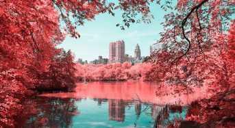 Tο Central Park σε μια… κόκκινη εκδοχή του