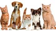 Inicia campaña para vacunar a perros y gatos contra la rabia