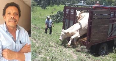El robo de ganado sigue presente