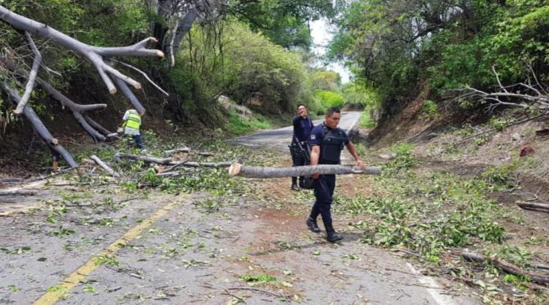 Apoya SSP al retiro de árboles, tras deslave en camino de LC
