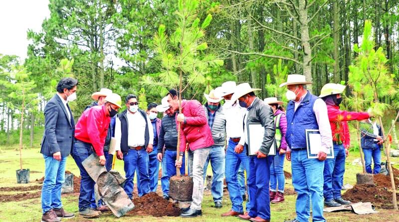 En el marco de la conmemoración del Día del Árbol, celebrada en el municipio de Singuilucan, el gobernador Omar Fayad dijo que una superficie de 3 mil 433 hectáreas forestales en ocho municipios de la región de Tulancingo, tienen certificados de bono carbono por manejo sustentable. La certificación internacional la recibieron los ejidos La Estancia y Los Romeros, en Singuilucan, por parte de Forest Stewardship Council; la certificación nacional para el ejido de Xayahualulco, en Cuautepec de Hinojosa, por parte de Simbionte Tueri Natura y, finalmente, el certificado de Modelo Sustentable de los Bosques de acuerdo con la Norma NMX-AA-143-SCFI-2015 al ejido de Sabanetas.