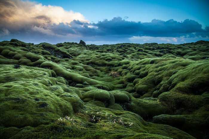 Τα εντυπωσιακά λιβάδια βρύων της Ισλανδίας!
