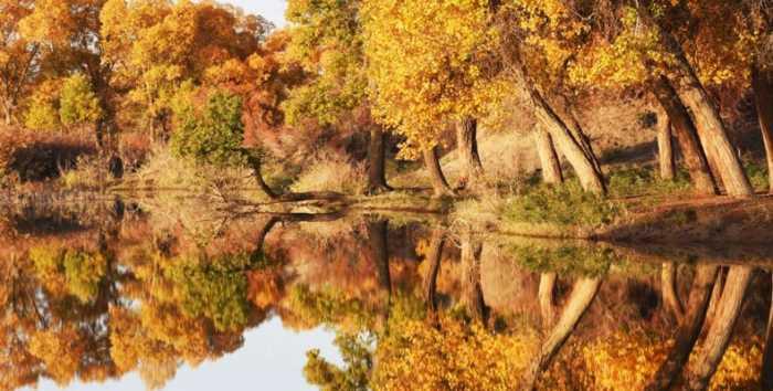 Huyang: Τα «χρυσά» δέντρα της Κίνας!