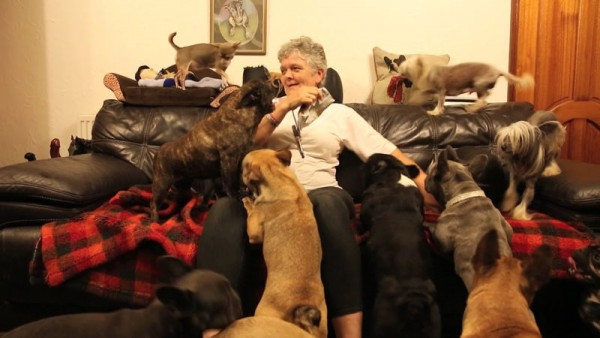 600x338xlife-with-41-dogs3-600x338.jpg.pagespeed.ic.QSH3XBBSA7
