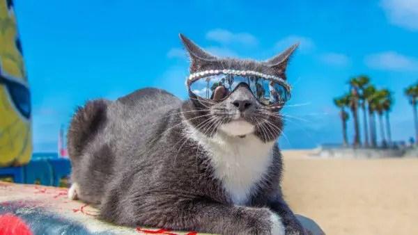 Bagel-sunglasses-cat-600x338