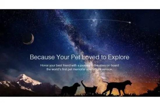 Celestis-Pets-550x363