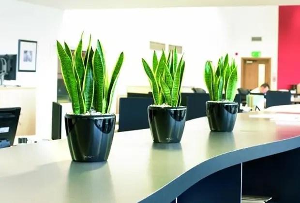 Plantas domésticas que pueden cambiar por completo el aire que ...