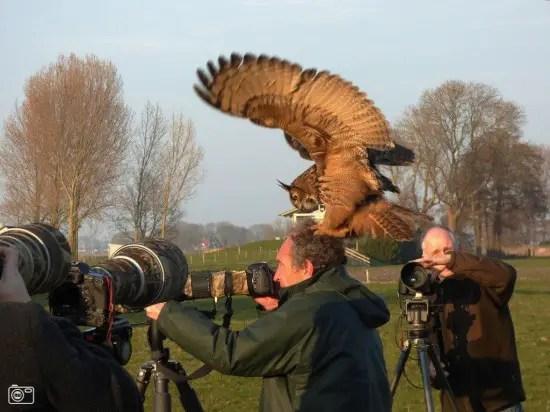 Noordeinde-owl5-550x412