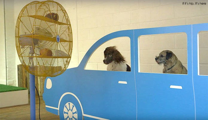 cruising-canines1