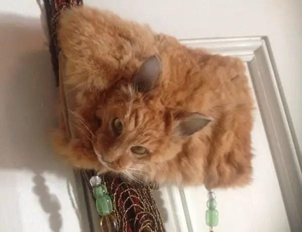 dead-cat-handbag3-600x461