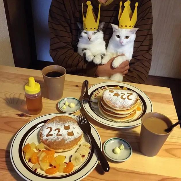 gatos-observando-humanos-cenar-naomiuno-1