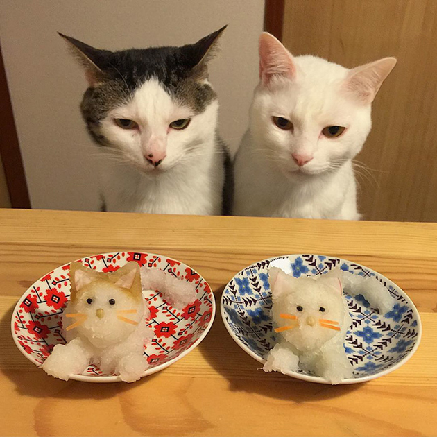 gatos-observando-humanos-cenar-naomiuno-10