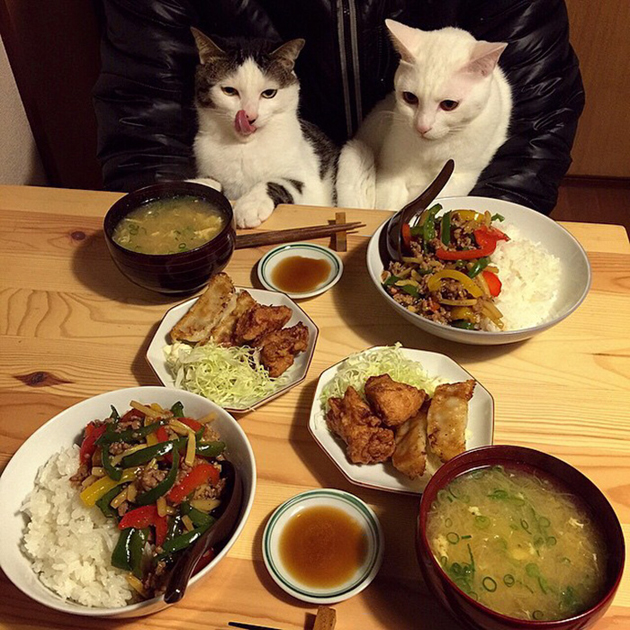 gatos-observando-humanos-cenar-naomiuno-13