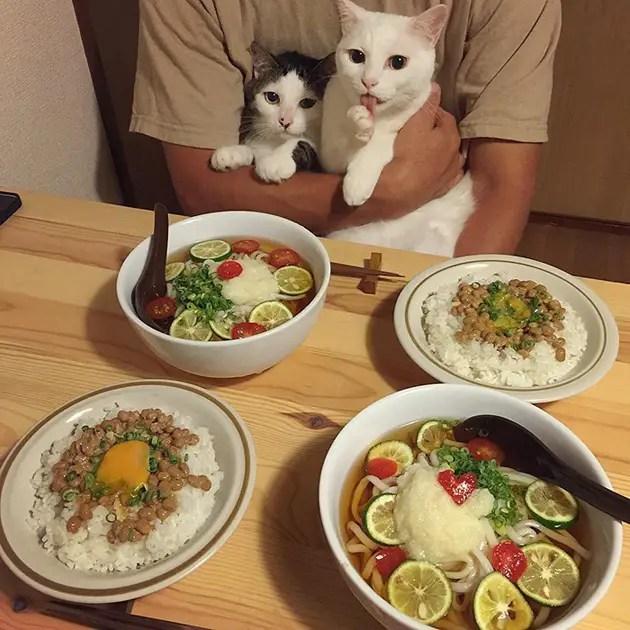 gatos-observando-humanos-cenar-naomiuno-4