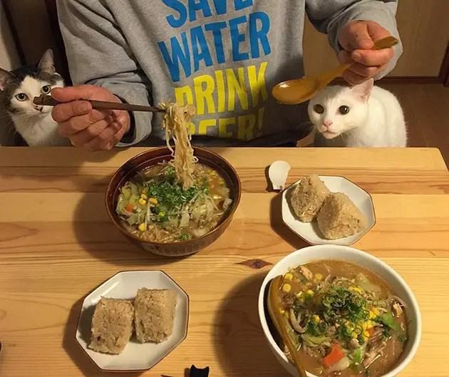 gatos-observando-humanos-cenar-naomiuno-7