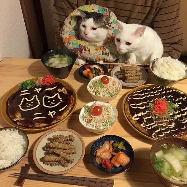 gatos-observando-humanos-cenar-naomiuno-9