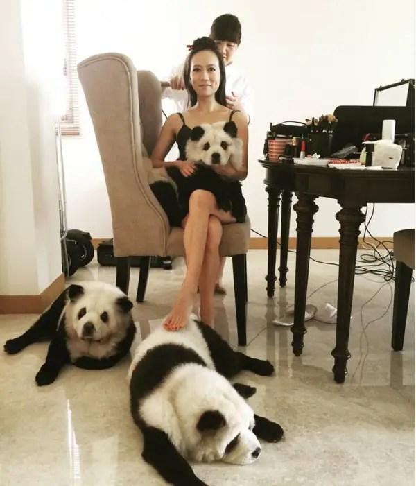 panda-chow-chow7-600x701