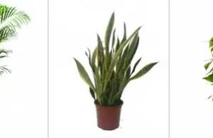 plantas salud